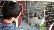 Visita del Consell d'Infants a la Protectora d'Animals